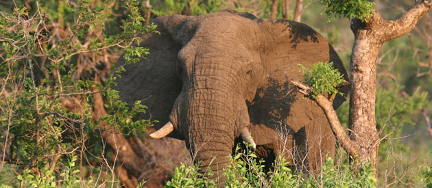 African Big 5 Safari Hluhluwe & Imfolozi - The Oldest Game Reserve in Africa