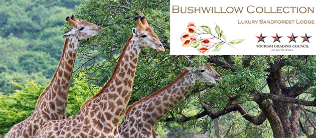 BUSHWILLOW COLLECTION